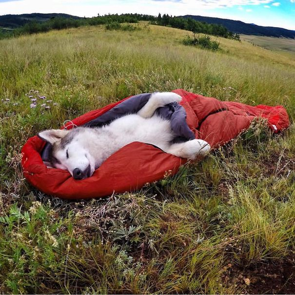 camping_with_dog_03