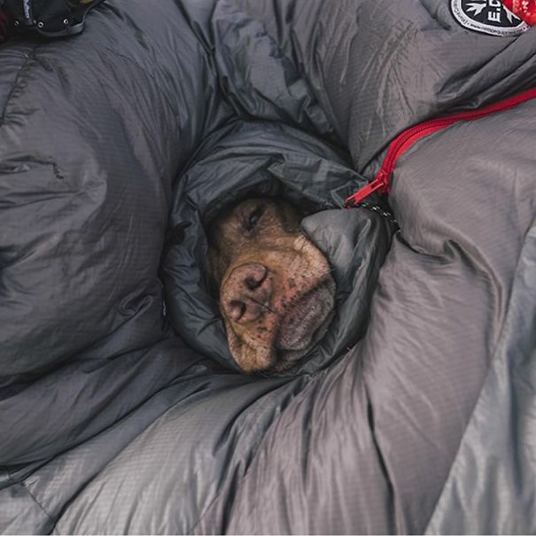 camping_with_dog_05