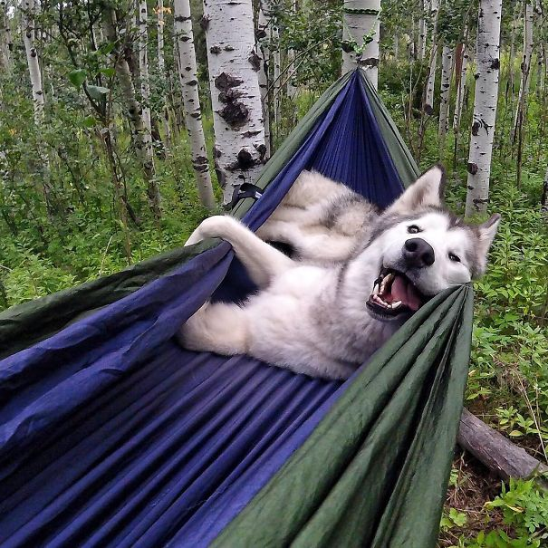 camping_with_dog_08