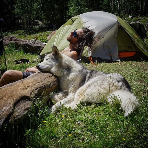 camping_with_dog_09