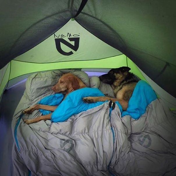 camping_with_dog_11