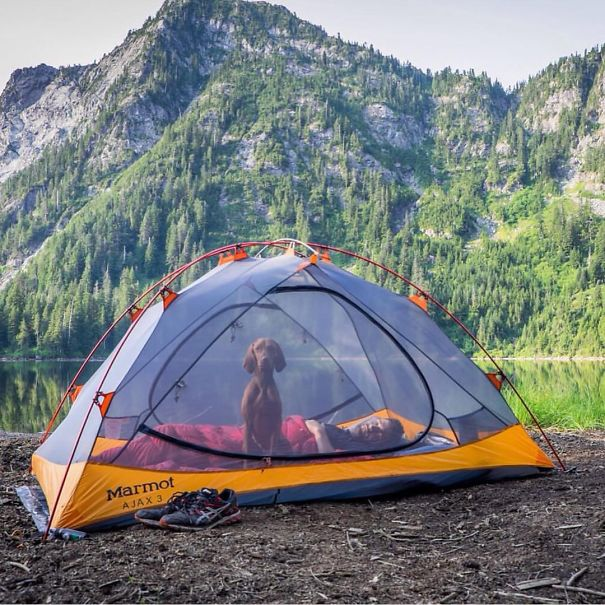camping_with_dog_21