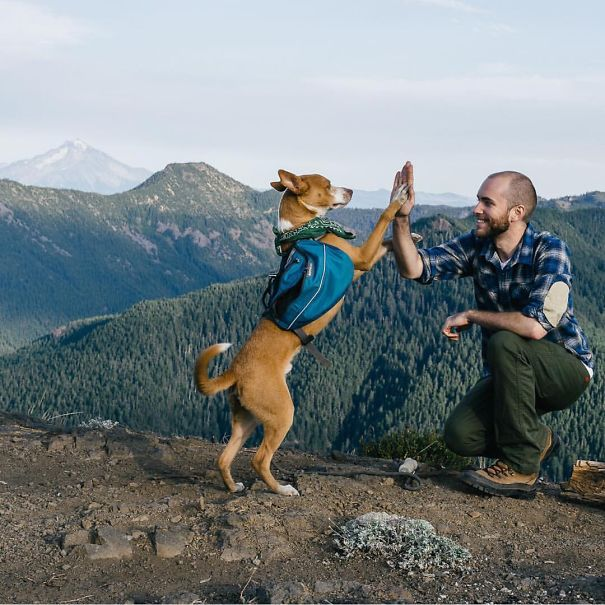 camping_with_dog_29