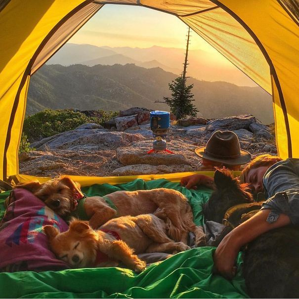 camping_with_dog_34