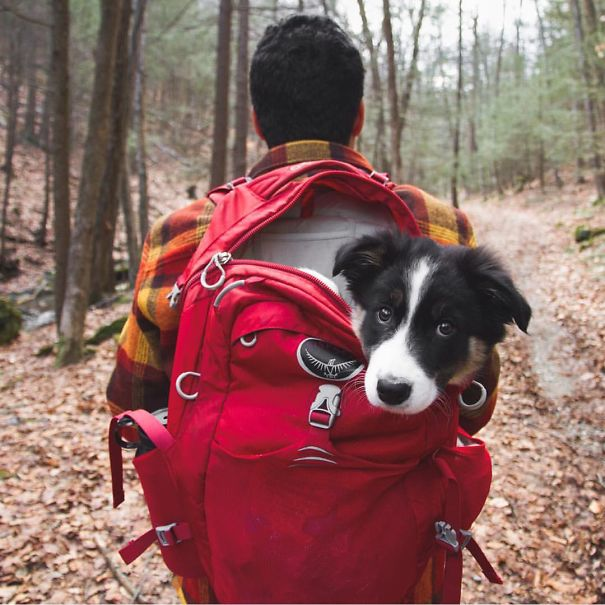 camping_with_dog_37