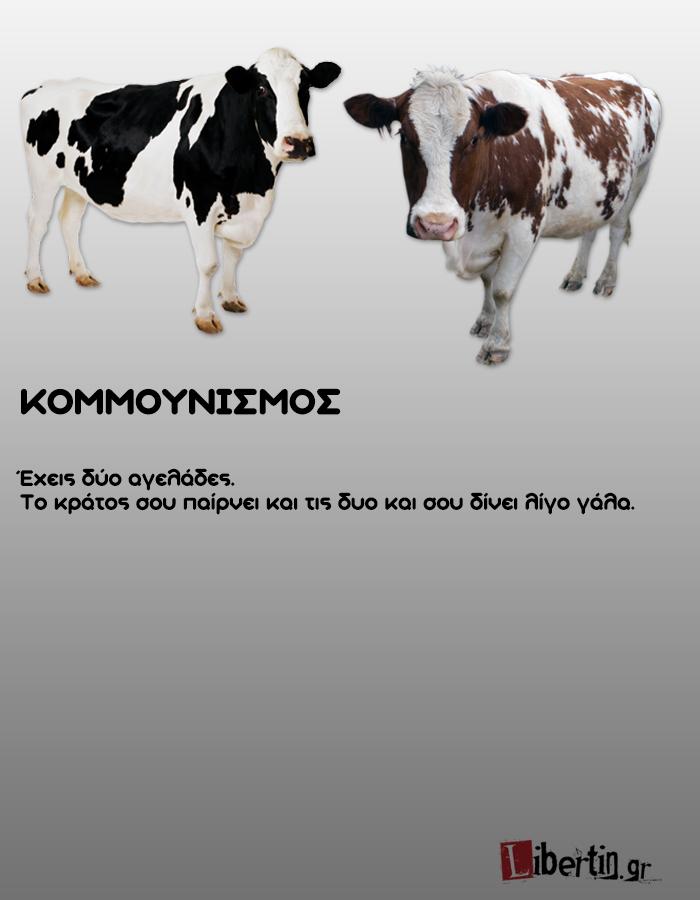 cowwsssss1