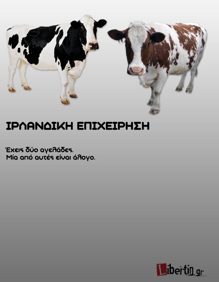 cowwsssss11