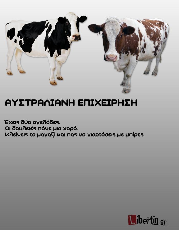 cowwsssss13
