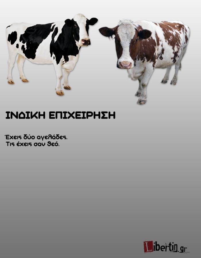 cowwsssss15