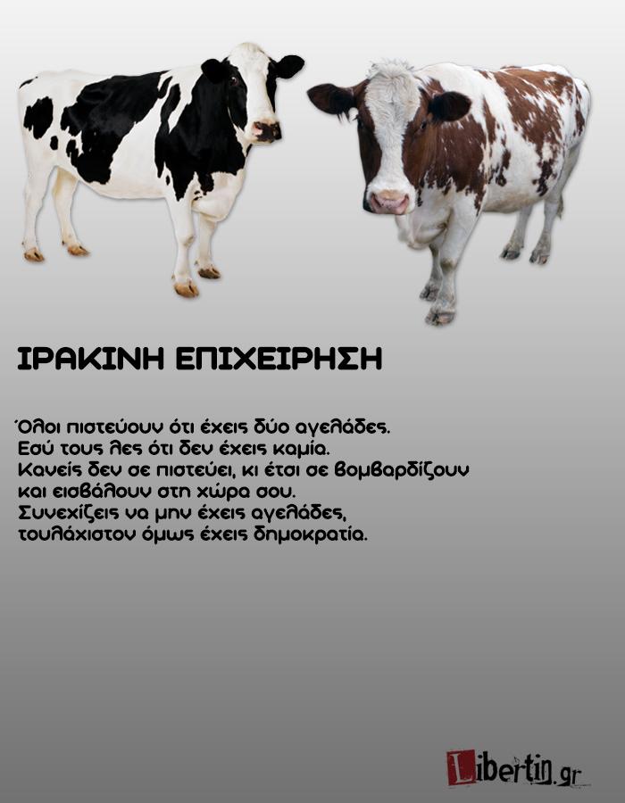 cowwsssss16