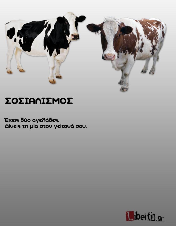 cowwsssss2