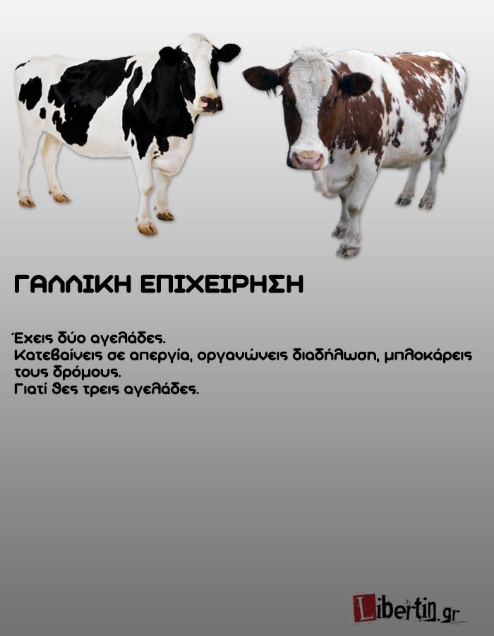cowwsssss8