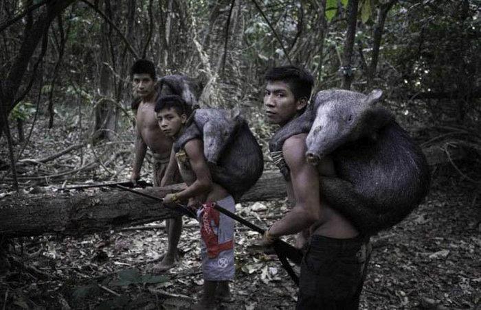 awa_amazon_tribe_breastfeeds_animals_06