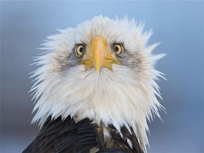 eagle_in_profile_02