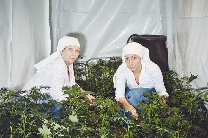 nuns_grow_marjuana_01