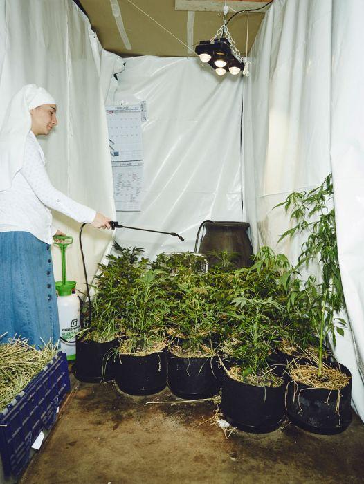 nuns_grow_marjuana_17