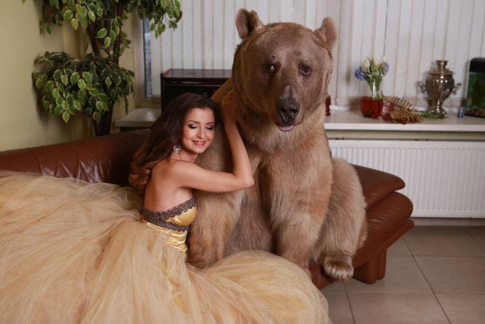 photo_bear_13
