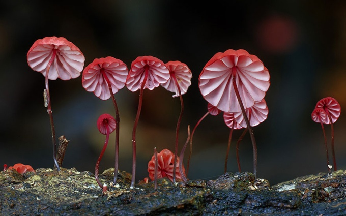 mushrooms_05