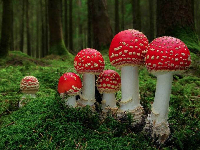 mushrooms_15