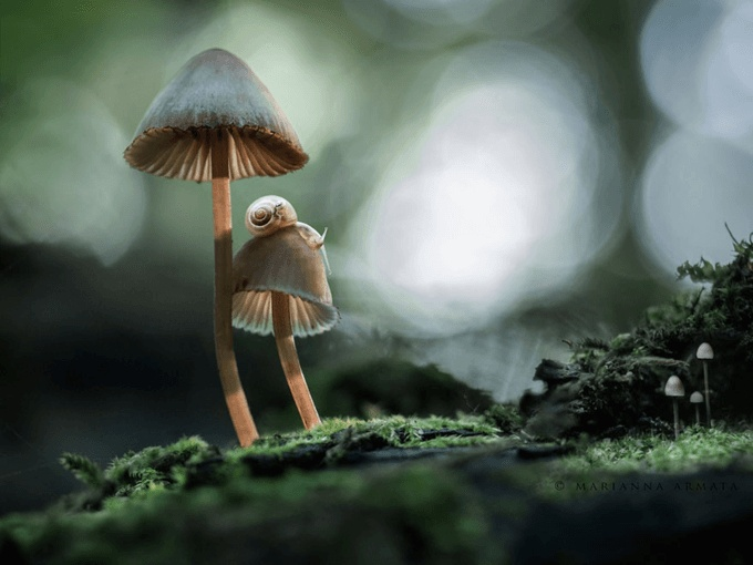 mushrooms_21