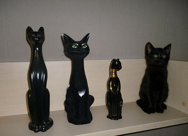 find-hidden-cat-camouflage-hide-and-seek-catouflage-71-58358fc2011da__605