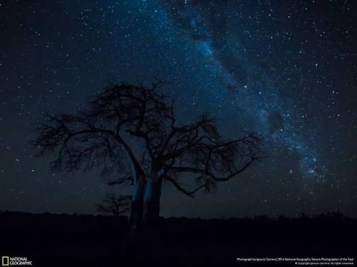 national_geographic_nature_04