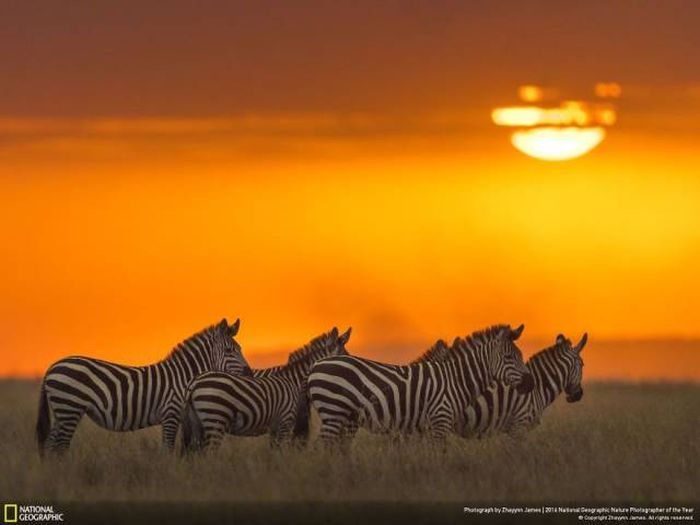 national_geographic_nature_14