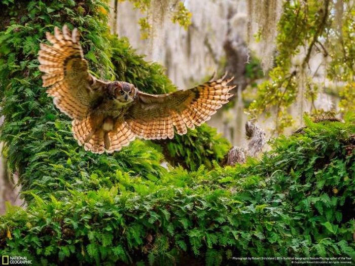 national_geographic_nature_19