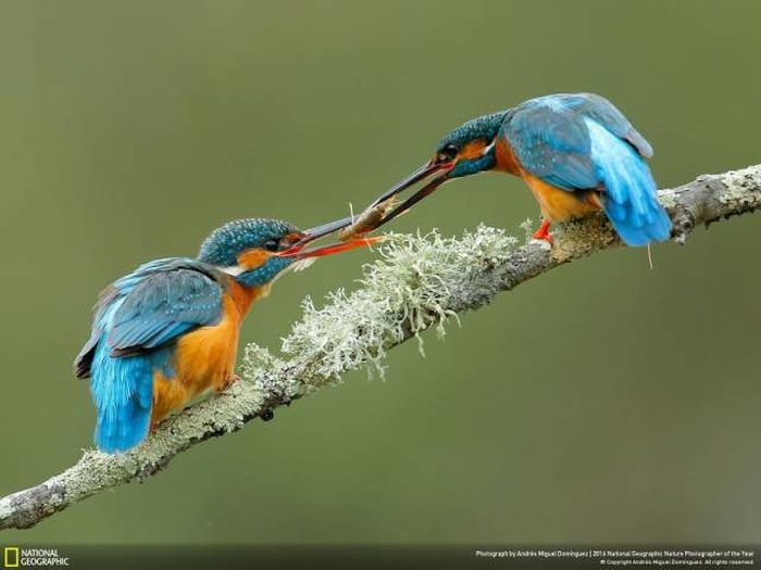 national_geographic_nature_22