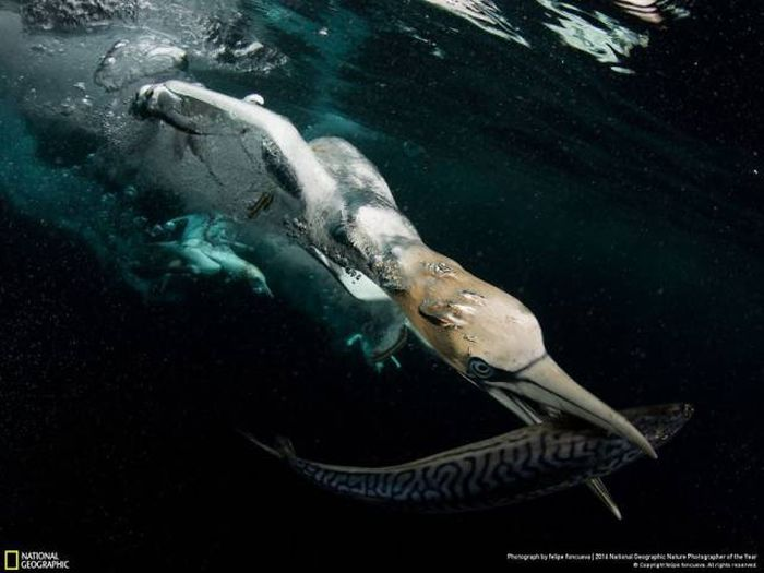 national_geographic_nature_24