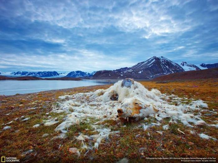 national_geographic_nature_26