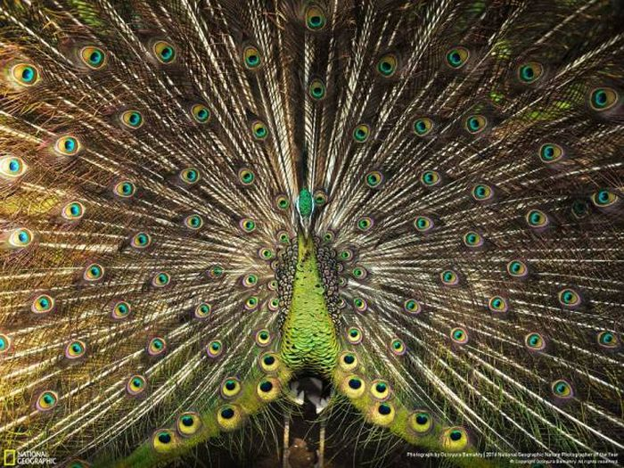 national_geographic_nature_29