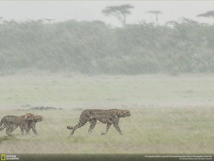 national_geographic_nature_39