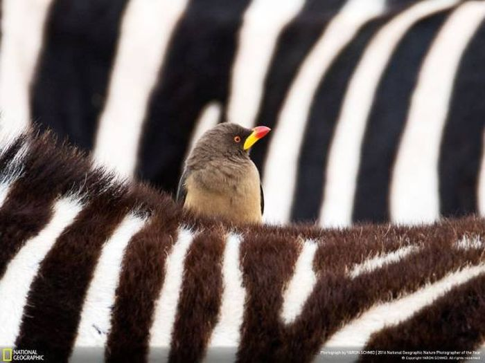 national_geographic_nature_40
