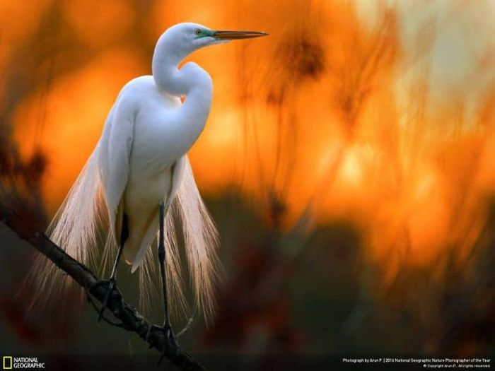 national_geographic_nature_48