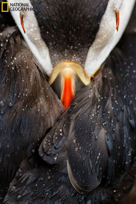 national_geographic_nature_49